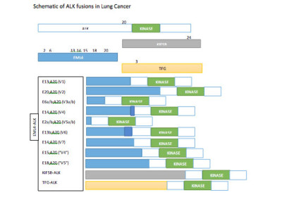 ALK gene mutation data collection