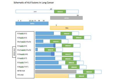 ALK gene mutation data collection