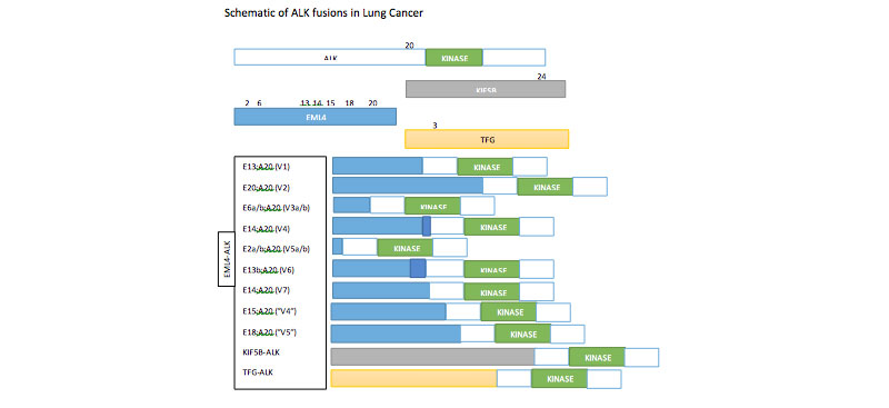 ALK gene mutation data collection to support the National Cancer Registration Service