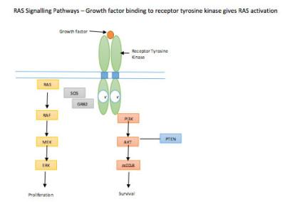 N- and K-RAS gene mutation data collection
